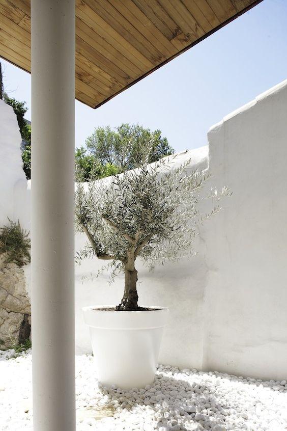 High, white walls are a staple of Mediterranean gardens
