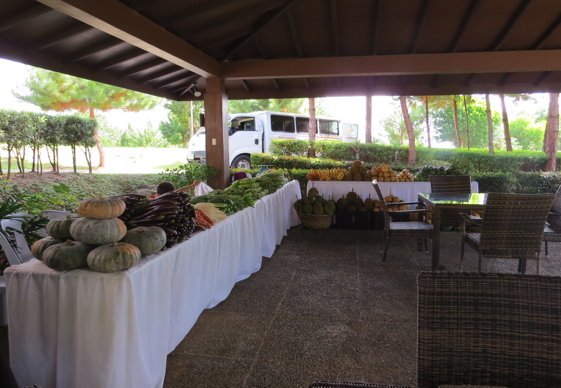 A variety of fruits and veggies from local vendors