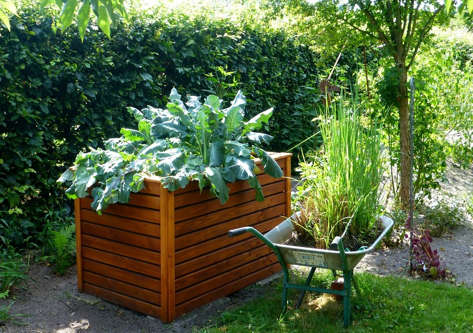 Homegrown is Best: A Primer on Backyard Gardening