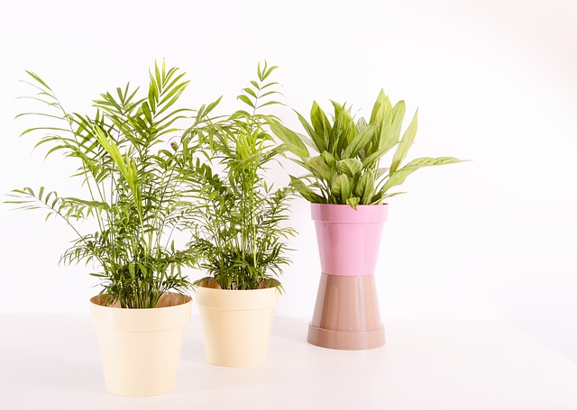 The Best Online Shops For Budding Plant Titos And Plant Moms